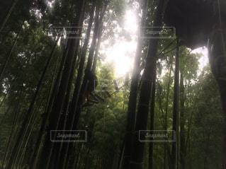自然の写真・画像素材[638994]