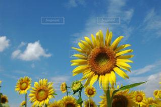 自然の写真・画像素材[654830]