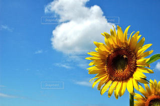 自然の写真・画像素材[654832]