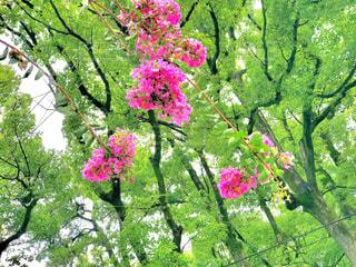 花の写真・画像素材[692077]