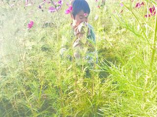 草の中に立っている小さな男の子の写真・画像素材[1559178]