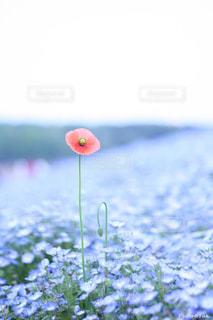 花の写真・画像素材[699494]