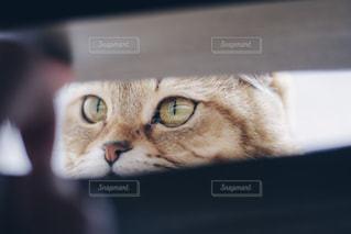 隙間から猫ちゃん - No.1161716