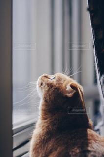 窓を見上げている猫 - No.1161717