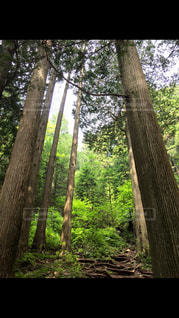 森の写真・画像素材[649332]
