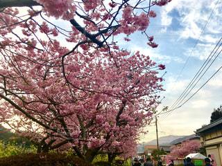 春の写真・画像素材[639595]