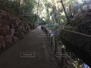 自然の写真・画像素材[639599]
