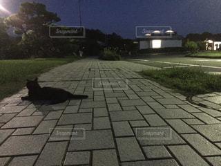 猫の写真・画像素材[639698]