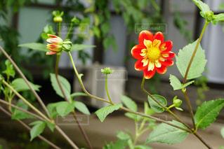 花の写真・画像素材[676219]