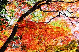 秋の写真・画像素材[645434]