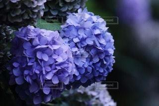 花の写真・画像素材[59616]