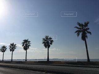ヤシの木と青空の写真・画像素材[922901]