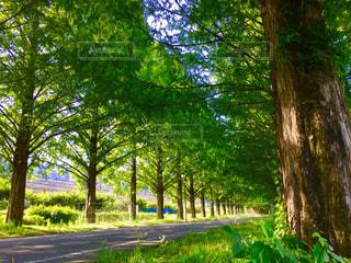 木の写真・画像素材[642656]