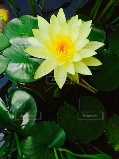 花の写真・画像素材[647118]