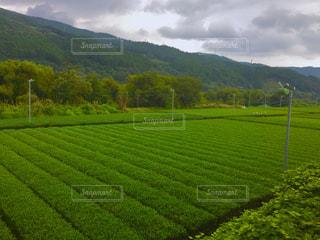 緑の写真・画像素材[647120]