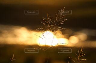 自然の写真・画像素材[643401]