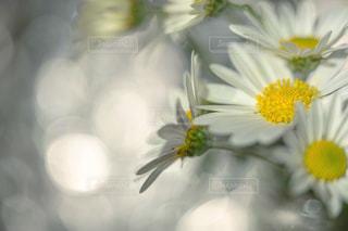 光に包まれての写真・画像素材[1655936]