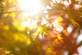 光を浴びての写真・画像素材[1012244]