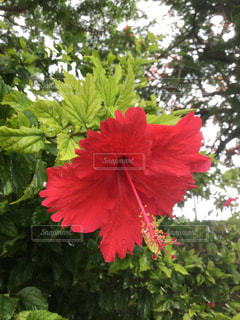 花の写真・画像素材[641195]