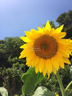 夏の写真・画像素材[642425]