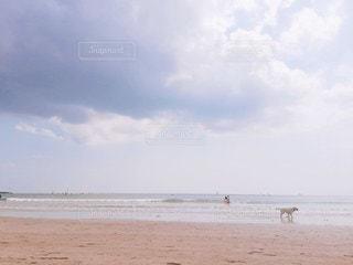 犬と海の写真・画像素材[2148475]