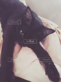 猫 - No.644295