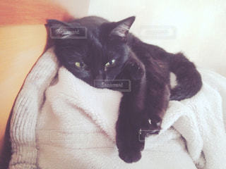 ベッドの上に座ってる黒い猫の写真・画像素材[725500]