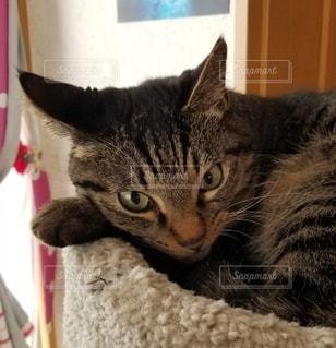 ベッドに横たわる猫の写真・画像素材[3325707]