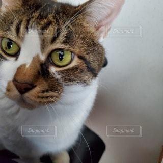 猫のクローズアップの写真・画像素材[3325711]