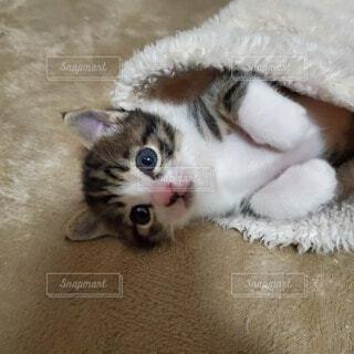 袖口から子猫の写真・画像素材[3831883]