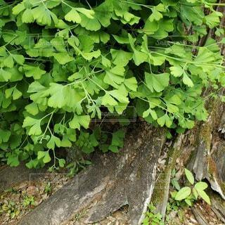 神社の木の根本の写真・画像素材[4425995]