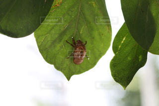 近くの緑の植物をの写真・画像素材[1058348]