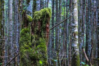 自然の写真・画像素材[642527]