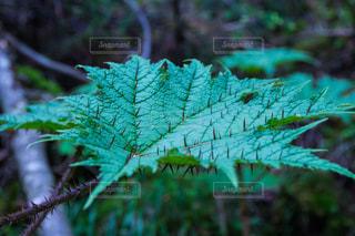 自然の写真・画像素材[642530]