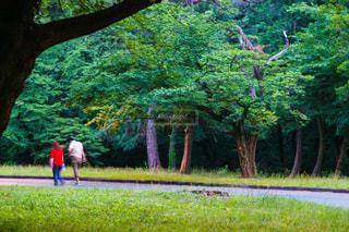 公園の写真・画像素材[642671]