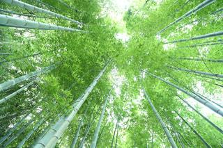 森林の写真・画像素材[642625]