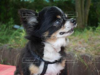 犬の写真・画像素材[644734]