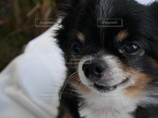 犬の写真・画像素材[646453]