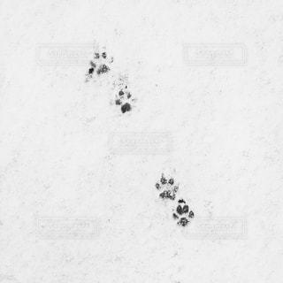 近くに雪の斜面をカバーの写真・画像素材[1026986]