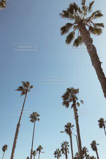 夏の写真・画像素材[2037682]