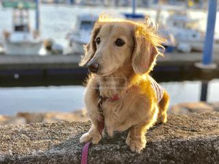 犬の写真・画像素材[643236]