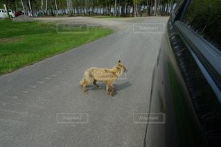 動物の写真・画像素材[644327]