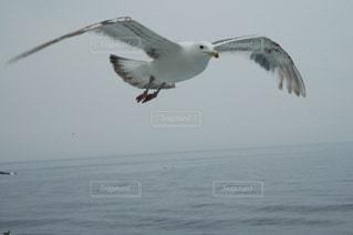 海の写真・画像素材[644437]