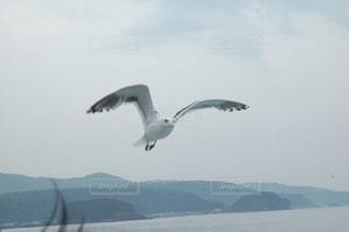 海の写真・画像素材[644445]