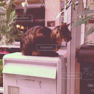猫の写真・画像素材[644500]