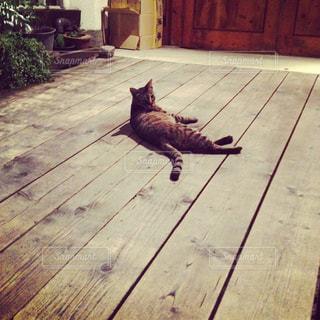 猫の写真・画像素材[644503]