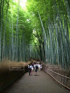 京都の写真・画像素材[644543]