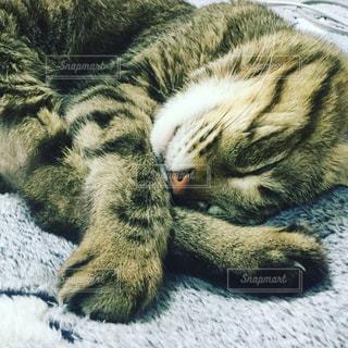 猫の写真・画像素材[644537]