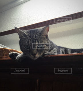 猫 - No.644633