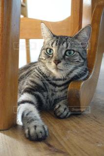 猫の写真・画像素材[655639]